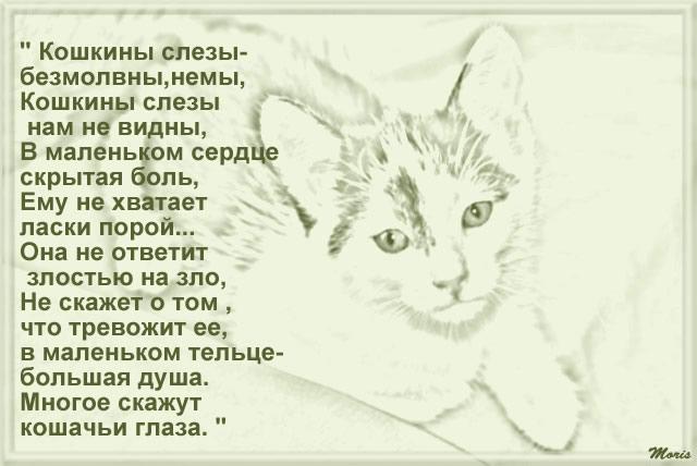 Кот стих до слез